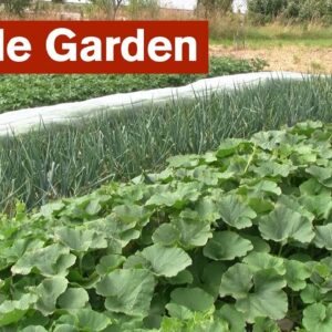 Simple Garden -  An Introduction