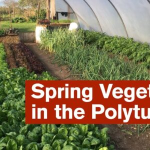 Spring Vegetables in the Polytunnel