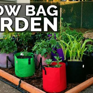 Start a Grow Bag Garden and Water It EASILY