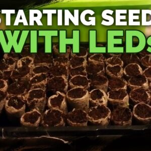 Starting Seeds with LED Lights