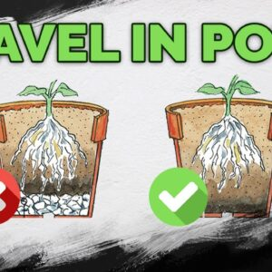 STOP Putting Gravel At The Bottom Of Your Pots!