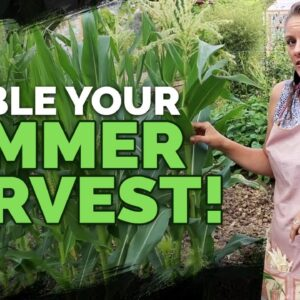 Succession Planting: Squeeze More Out Of Your Vegetable Garden