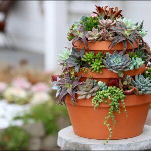 Succulent Tower 🌿// Garden Answer