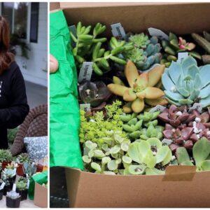 Succulent Unboxing! 🌵💚🌿// Garden Answer
