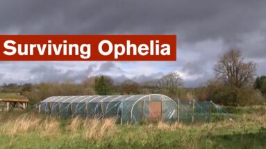Surviving Ophelia