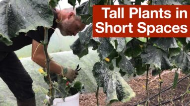 Tall Plants in Short Spaces