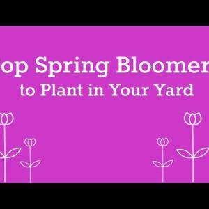 Ten Spring Blooming Shrubs for your Garden