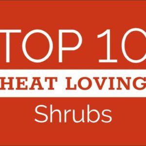 Ten Top Shrubs for Hot Climates