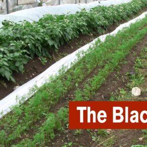 The Black Plot