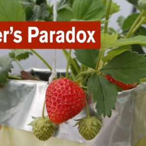 The Grower's Paradox