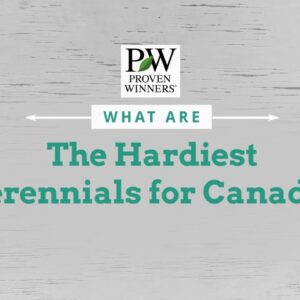 The Hardiest Perennials for Canada