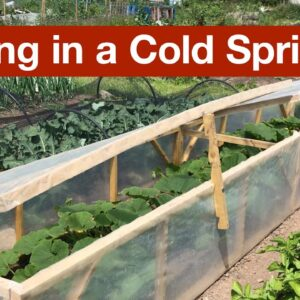 Thriving in a Cold Spring