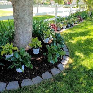 Planting a Shady Border! 💚🌿💚 // Garden Answer