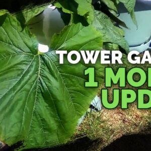Tower Garden Growth After One Month