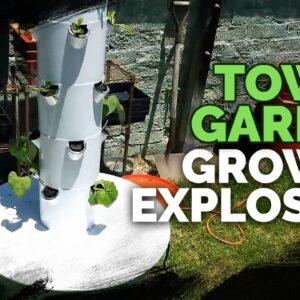 Tower Garden Insane Plant Growth