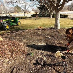 Transplanting a Few Perennials! 🌿💚 // Garden Answer