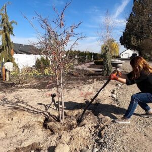 Transplanting this Redbud Tree Did Me In! 🌳 // Garden Answer