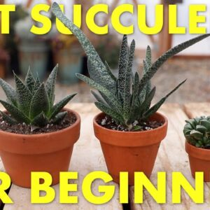 Best Succulents to Grow Inside for Beginners! 🌵👍// Garden Answer