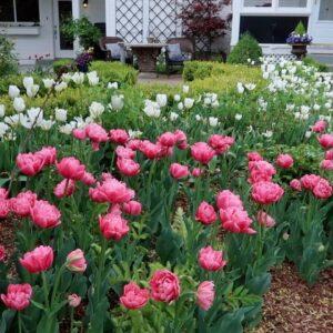 Tulip Update + Weekly Recap 🌿// Garden Answer