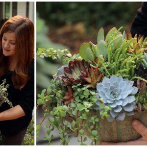 Arranging Succulents in an Urn!  🌿🥰💚 // Garden Answer