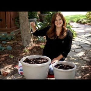 Using Drip Irrigation to Water Your Container Plants