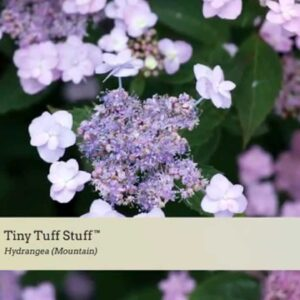 Variety Introduction: Tiny Tuff Stuff™