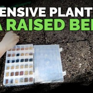 How to Maximize Space in a Raised Bed (High-Density Planting) 🌱