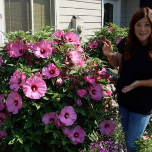 Update Tour of the Hibiscus We've Planted the Last Few Years! 🌺😍 // Garden Answer
