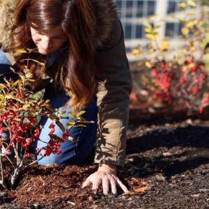 When Is It Too Late To Plant in Autumn?