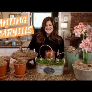 Amaryllis Unboxing & Planting! 🥰🎄❤️// Garden Answer