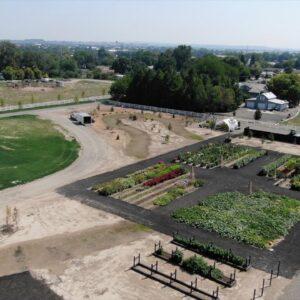 Planting A Wichita Blue Juniper and Blue Blazes Hyssop! 🌲💙 // Garden Answer