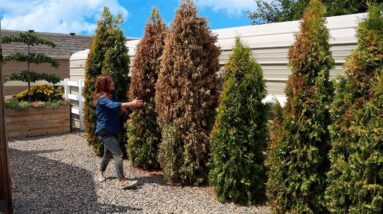8 Garden Fails This Year! 🤦♀️🥴🤷♀️ // Garden Answer