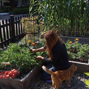 Raised Bed Vegetable Garden Tour & Maintenance! 🌽🌿🍅 // Garden Answer