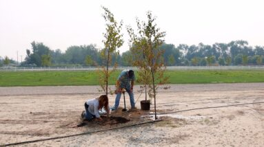 Planting One Pine & Two Birch Trees! 🌳🌲🌳 // Garden Answer