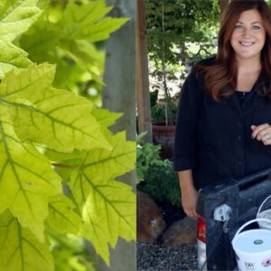 We've Changed How We're Treating Yellowing Foliage and It's Working! 🌿💪 // Garden Answer