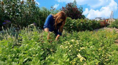 Seeding Grass, Cut Flower Arrangements & Strawberry Biscuits! 🌾🌸🍓  // Garden Answer