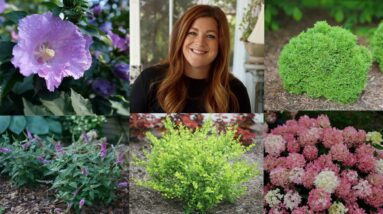 10 Small Shrubs that Will Fit In Any Garden! 🌿 // Garden Answer