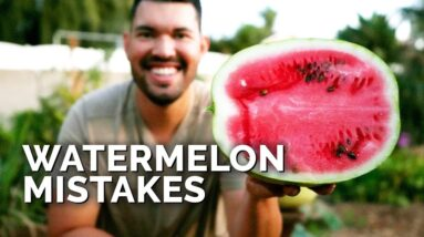 6 Watermelon Growing Mistakes To Avoid 🍉