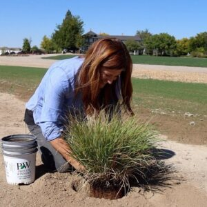 Planting An Evergreen, Ornamental Grasses and a Blooming Shrub! 🥰🙌 // Garden Answer