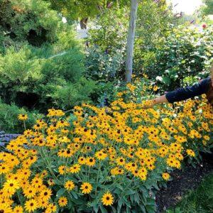 Garden Maintenance - Wednesday Zone! �🌿☺� // Garden Answer