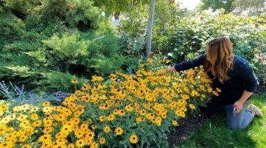 Garden Maintenance - Wednesday Zone! 👍🌿☺️ // Garden Answer