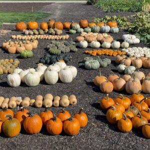 Pumpkin & Squash Harvest! 🎃🙌🧡 // Garden Answer