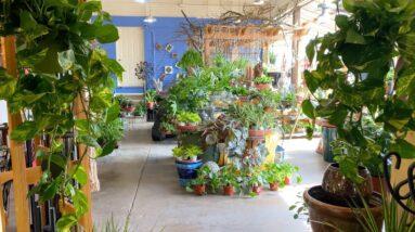 Garden Center Houseplant Tour! 🌿🙌💚 // Garden Answer