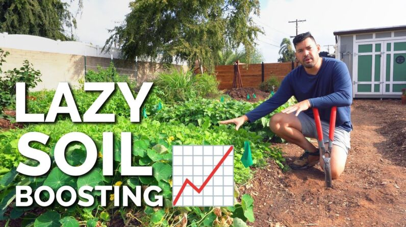 Cover Cropping: The LAZIEST Way to Improve Your Soil