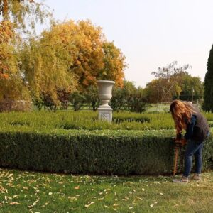 Trimming our Boxwoods! ✂�🌳✂� // Garden Answer