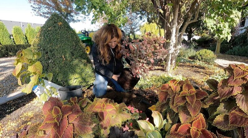 Planting Garlic, Harvesting Pumpkins & Planting Some Stuff! 🧄🎃🌿 // Garden Answer