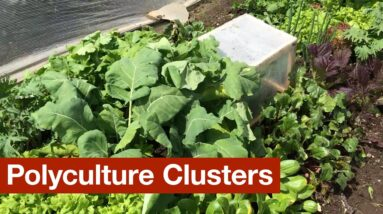 Polyculture Clusters