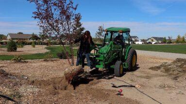 Planting the Most Beautiful 'Royal Raindrops' Crabapple Tree! 🌳🥰💚 // Garden Answer